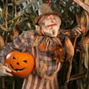 Scarecrow With A Carved Pumpkin  In A Corn Field Poster