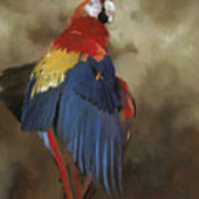 Scarlet Macaw One Poster
