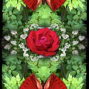 Scarlet Rose Poster