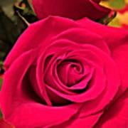 Scarlet Roses Poster