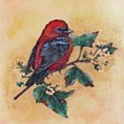 Scarlet Tanager - Acrylic Painting Poster