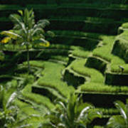 Scenic Valleys With Rice Fields In Bali Poster