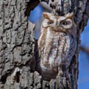 Screech Owl #1 Poster