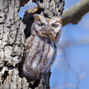 Screech Owl #2 Poster