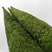 Sculpturesque Greenery - Three Cypress Trees Chiseled Against The Sky Poster
