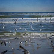 Sea Birds Feeding On Florida Coast Dsc00473_16 Poster