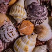 Sea Bones 19 Poster