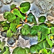 Sea Grapes  Poster