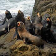 Sea Lion Chorus Poster