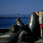 Sea Lion Sculpture  Poster