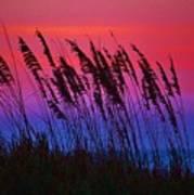 Sea Oat Sunset Poster