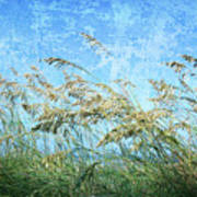 Sea Oats One Poster
