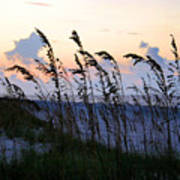 Sea Oats Silhouette Poster