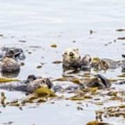 Sea Otter Poster