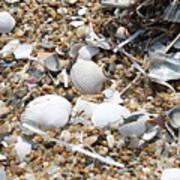 Sea Ribbons And Shells Poster