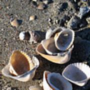 Sea Shells At Folly Beach In Charleston Sc Poster