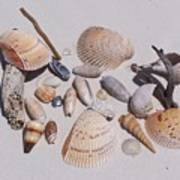 Sea Shells On White Sand Poster