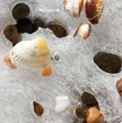 Sea Shells Rocks And Ice Poster