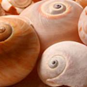 Sea Spirals Poster by Barbara  White
