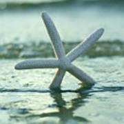 Sea Star Vert Poster