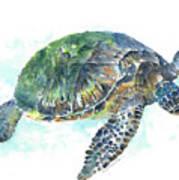 Sea Turtle #20 Poster