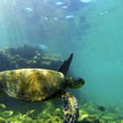 Sea Turtle #5 Poster