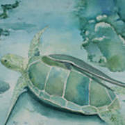 Sea Turtle And Friend Poster