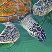 Sea Turtle Poster by Thank you.