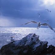 Seabird Flack Poster