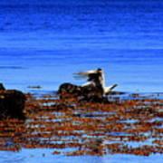 Seagul Landing Poster