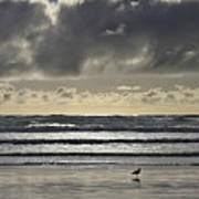 Seagull At Cannon Beach Poster