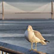 Seagull At Ravenel Bridge Poster
