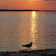 Seagull At Sunset Poster
