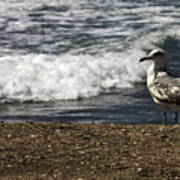 Seagull At The Beach Poster