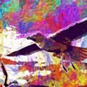 Seagull Birds Flight Wings Freedom  Poster
