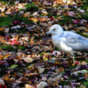 Seagull In The Fallen Leaves Poster