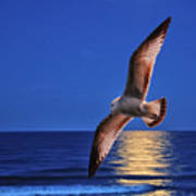 Seagull In The Moonlight Poster