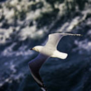 Seagull In Wake Poster