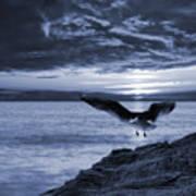 Seagull Poster by Jaroslaw Grudzinski