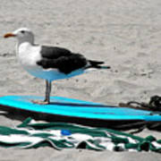 Seagull On A Surfboard Poster