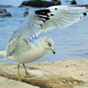 Seagull On The Beach Poster