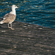 Seagull On The Pier Poster