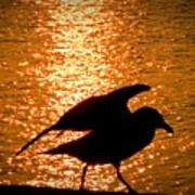 Seagull Silhouette Poster