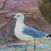 Seagull Strut Poster