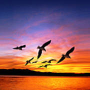 Seagull Sunset   Poster