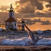 Seagull Takeoff - Tiscornia Beach  Poster