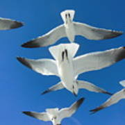 Seagulls #4 Poster