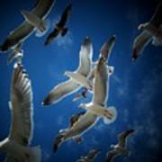 Seagulls Above Poster