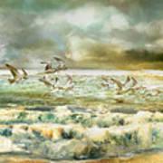 Seagulls At Sea Poster