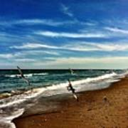 Seagulls At The Beach Poster